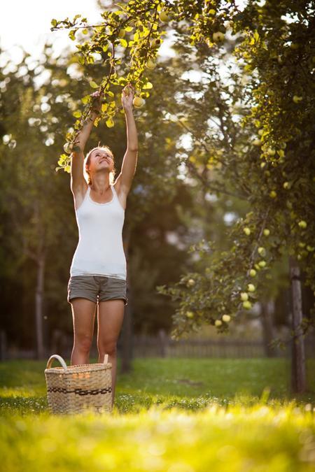 low hanging fruit clash inefficient